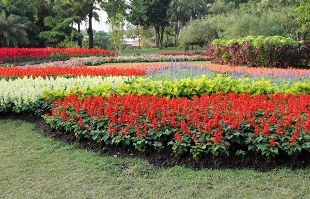 fleurs colorées dans le jardin